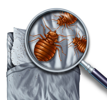 Bed Bug Treatment Auckland Exterminate Beg Bugs